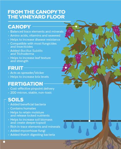 ViticultureDiagram